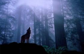 Kindle 商店入华,真的是狼来了?