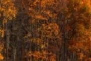 十年树木  蔚然成林:新经典是如何炼成的?