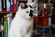 波兰固定图书价格法草案争议与书店的生命线