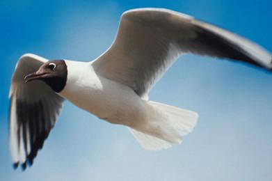 如果电子书的增长和设备有关,如何给它一副翅膀,让它高飞