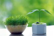 一植一庭院,万物始于灵