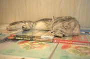 南京猫咪书店:感性的开始  理性的梳理