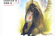 最会讲故事的动物学家河合雅雄历时17年完成《河合雅雄动物记》