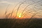 草原记忆,缘于花城璀璨;红马来了,因为海天辽阔——千夫长作品赏读会在内蒙古举行