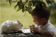 预热国际安徒生奖颁奖礼,从曹文轩获奖谈中国童书出版