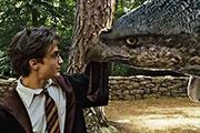 """解密   """"哈利·波特""""的魔法世界的神奇动物"""