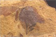 """你知道吗?最早的带羽毛恐龙和全球最早的""""花""""在这里"""