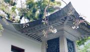 江西教育出版社《野花开处是家乡》新书发布会将在书博会期间举行