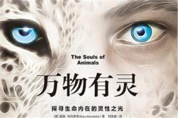 看见动物的灵魂,探寻生命内在的灵性之光