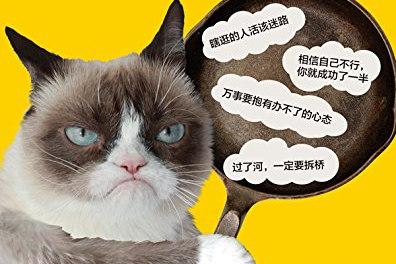 臭脸猫,全世界粉丝最多的猫咪