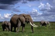 《大象孤儿》:拯救大象的同时也是在拯救我们人类自己