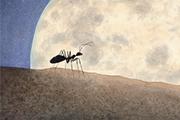 将故事的答案藏于你心  ——《一只蚂蚁爬呀爬》编辑手记