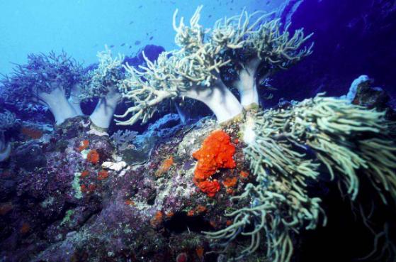 """探测海洋,追溯历史,带你走进""""深海""""这门学问"""