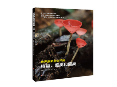 """植物、藻类和菌类,看到""""静默""""的自然界"""