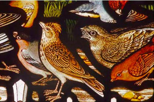 以观鸟为切入点的一部人类文明发展史