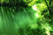 自然的灵光——24本书与自然相遇的方法