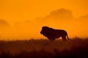 �v��堂 | 《金犀牛:中世�o非洲史》:�原�S金世�o下非洲的�N��文化