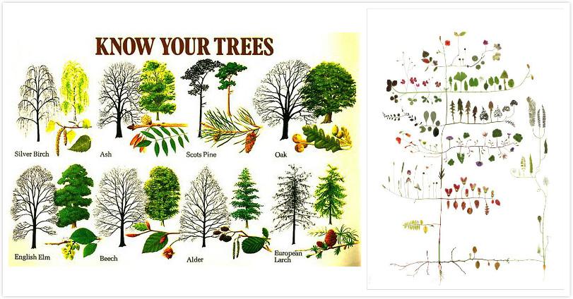 制作贴画:   如何制作贴画自不必多言.植物贴画的好处是很环保,所
