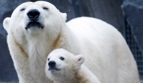 那些关于动物我们不知道的事:10.4世界动物日主题书单